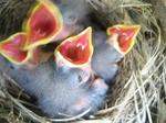 小鳥2.JPG